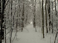 shaw-mountain-trail-winter