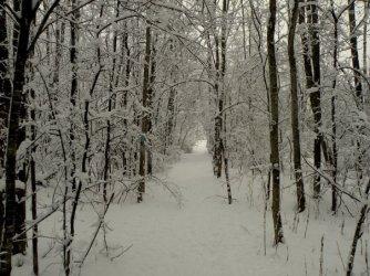 shaw-mountain-trail-winter