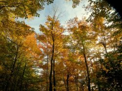 shaw-mountain-trees